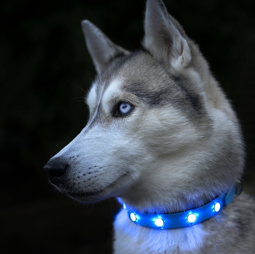 Super Bright Led Dog Collar Auraglow Led Lighting