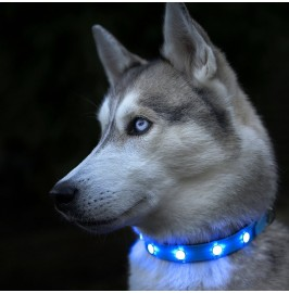 Auraglow Dog Collar